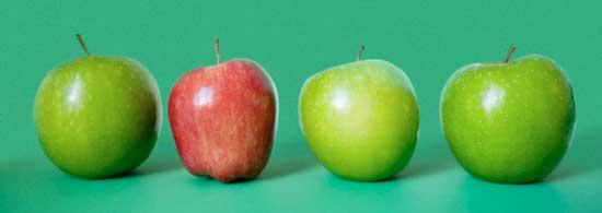 на что расходуется пища в организме